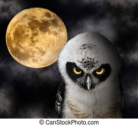 Owl and Full Moon - Close up of Owl and Full Moon, Halloween...
