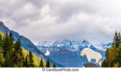 Entrance to Mount Robson Park - Entrance to Mount Robson...