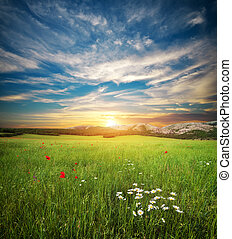 Green spring meadow Nature lanscape composition