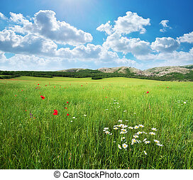 Green meadow - Green spring meadow. Nature lanscape...