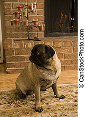 Pug on a Rug in Front of Fireplace.
