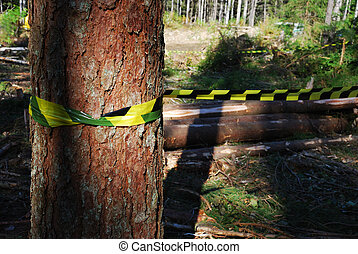 deforestation - cut off trees in the forest horizontal
