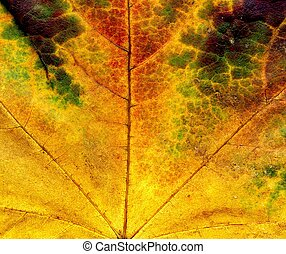 Detailed Fall Maple Leaf Texture - Highly detailed Autumn...