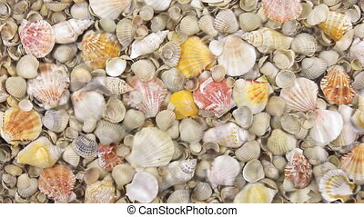 Wind along the coast with sea shells, beautiful background,...