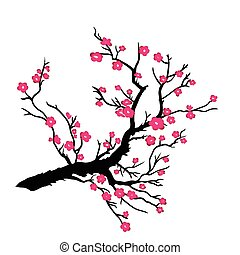 Japanese plum blossom on a white background Vector...