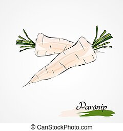 parsnip - Hand drawn vector ripe white parsnip vegetable...