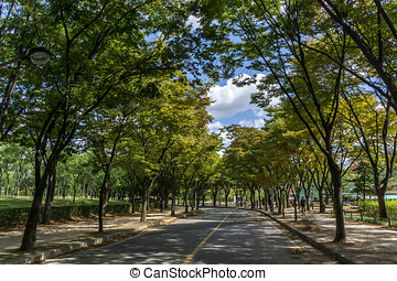 Incheon Grand Park early autumn - A bike road in incheon...