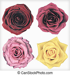 Four Rose Flowers Isolated Retro Vintage Style