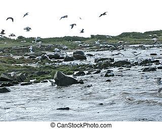 Skrea Strand Falkenberg birdlife - Natural landscape with...