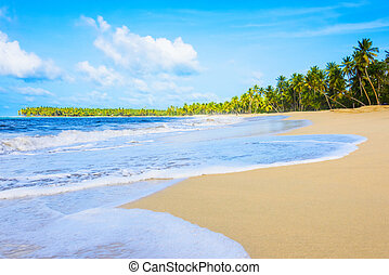 sandy sea beach - sandy beach and calm blue sea surf