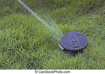 pop up lawn water sprinkler spraying water