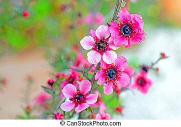 Blossoming flowers in springtime
