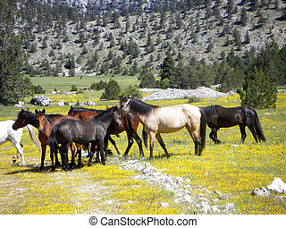 Wild horses - A group of wild horses in valley with yellow...