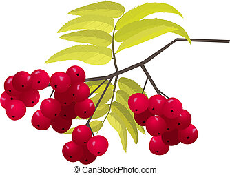 asberry brunch, vector illustration