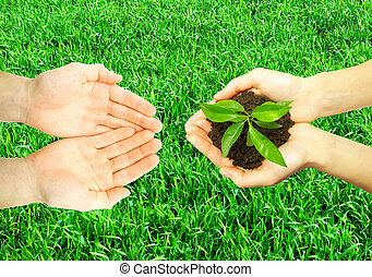 plant in hands - Hands holding sapling in soil on grass...
