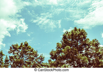 pine and blue sky, vintage toning
