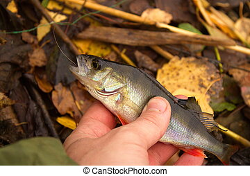 bass in the hand of fisherman against the river