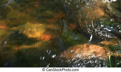 stream runs on stones in a sunny da