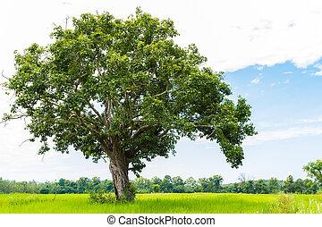 tree on the field and sky  - tree on the field and sky