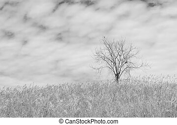 dry tree on the field and sky on black and white background