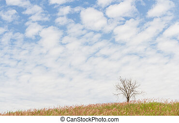 dry tree on the field and beautiful sky - dry tree on the...
