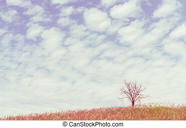 dry tree on the field and beautiful sky, vintage toning