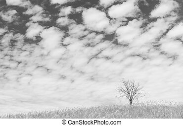 dry tree on the field and beautiful sky on black and white...