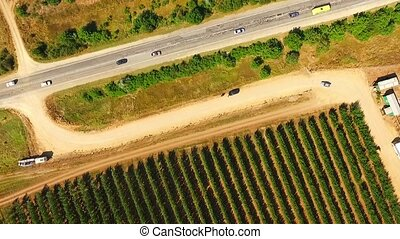 Aerial View Over Fruit Orchards And Road - AERIAL VIEW: This...