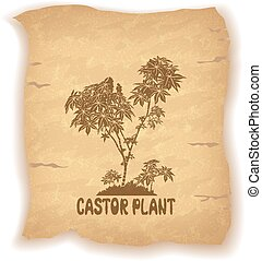 Castor Plant on Old Paper - Castor Plant Silhouette and the...