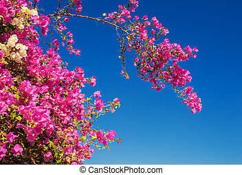 Blooming tree with red flowers on blue sky background