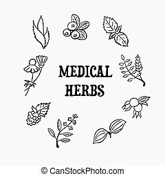 medical herbs - Vector illustrarion of medical herbs and...