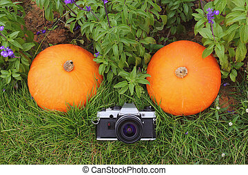 Vintage film camera with pumpkins decorated in the garden with fresh flower
