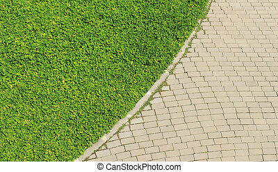 Weed growing on Brick Road. Background texture