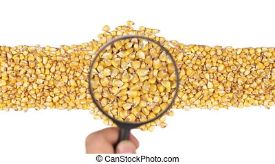 Magnifying glass increases the corn grains, motion up