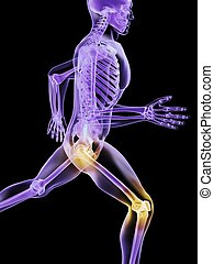 painful knee and hip - 3d rendered illustration of a running...