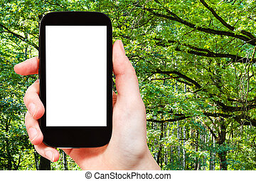 smartphone and green oak branches in summer forest - travel...