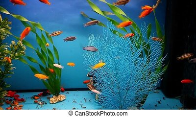 aquarium fish background blue calm swim grass saver video -...