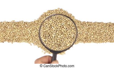 Magnifying glass increases the pearl barley grains, motion...