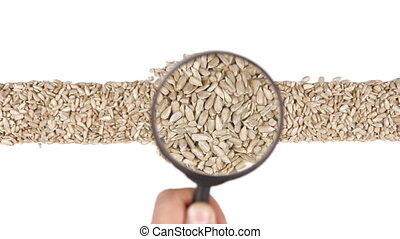 Magnifying glass increases the sunflower seeds, motion up