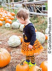 Pumpkin patch - Cute baby girl picking her pumpkin for...