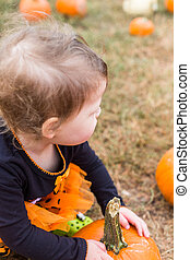 Pumpkin patch - Cute baby girl picking her pumpkin for...