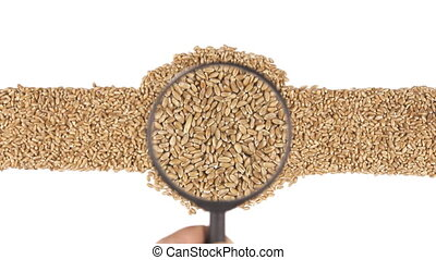 Magnifying glass increases the wheat grains, motion up