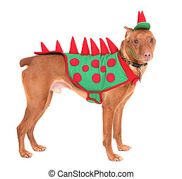 doberman dinosaur - one reddish miniature doberman dressed...