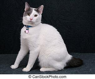 white kitty on black