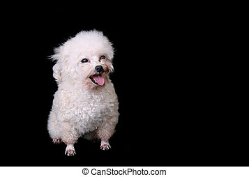 isolated dog