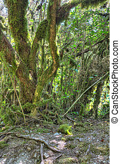 Mossy trees at wild forest