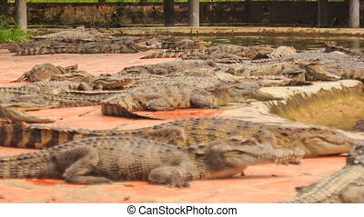 crocodiles lie along edges of stone bank of pond in park -...