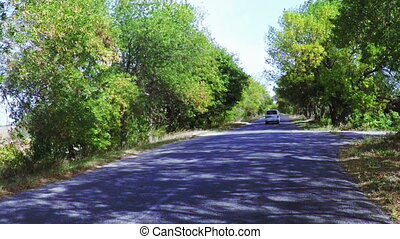 Road among trees - Slow motion driving on asphalt among...
