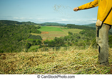 Man Hands Sowing Oat Seeds on the Field