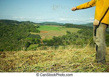 mãos, aveia, semear, homem, Sementes
